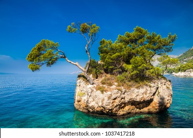 the rock with growing pine in the sea, Brela, Makarska Riviera, Croatia