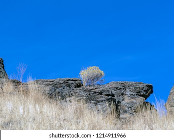 Rock ledge in with a sagebrush growing out of it in the Northern Nevada desert.