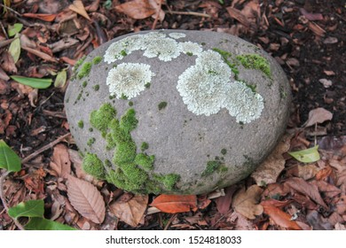 rock lichen moss winter isolated
