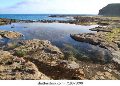 Rock pool, Coastline, Curio Bay, New Zealand