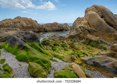 Rock pool covered in green seaweed.