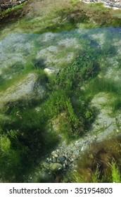 Rock Pool and Green Seaweed