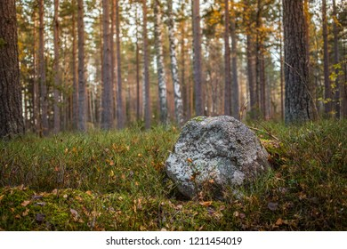 A rock in a Scandinavian forest on a late autumn day.