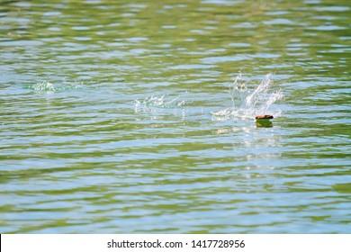 Rock Skipping Across Green Blue Water Lake River Pond