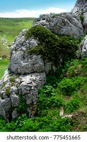 Rock stone on mountain plateau. Rock is covered with bushes, grass and moss. Summertime for travelling and hiking.