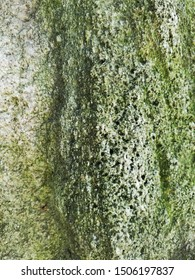 Rock texture with green mossy coloring