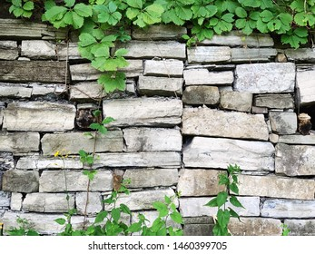 Rock wall with green foliage