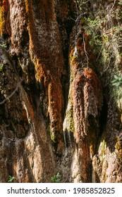 Felswand mit Moos überwuchert und von der Sonne erhellt
