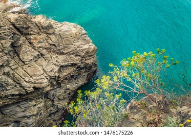 Rock and yellow flower over sea water in Cinque Terre, Italy - romantic travel site with rugged coastline and steep cliffs. Famous tourist destination, UNESCO world heritage site