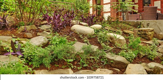 Rockery and Alpine Garden With Wild Greenery And Flowers Near The House Or Hotel. Modern Backyard Decorative Alpine Hill Or Alpine Slide. Abstract Web Banner
