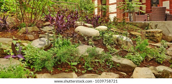 Rockery Alpine Garden Wild Greenery Flowers Stock Photo (Edit Now
