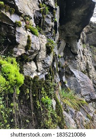 Rockface with natural mossy growth