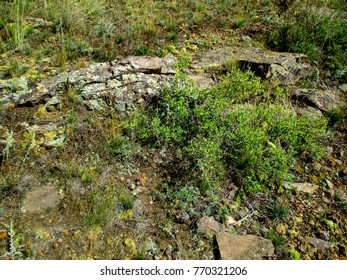 Rocks against the background of grass, wild cabbage and shrubs