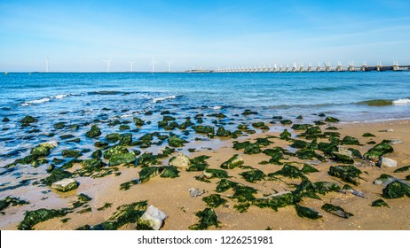 Rocks covered in seaweed at Banjaardstrand along the Oosterschelde inlet at the Schouwen-Duiveland peninsula in Zeeand Province in the Netherlands. The Storm Surge Barrier in the background