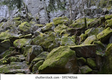 Rocks and forest