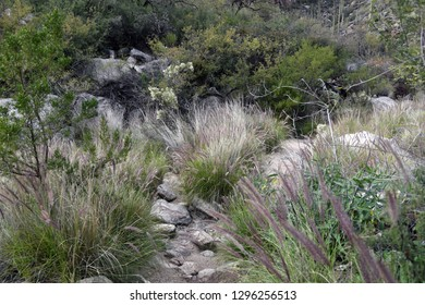 Rocks and fountain grass in Ventana Canyon, Tucson, Arizona