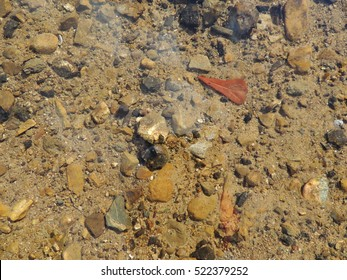 Rocks and leaf under water with leaf near top