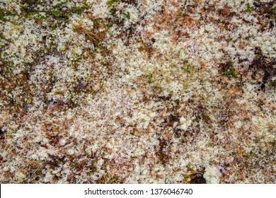 Rocks overgrown with white moss. Carpet moss white. Moss on a rock face. Relief and texture of stone with patterns and moss.