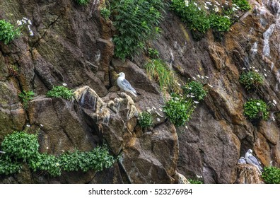 Rocks in the Pacific Ocean where birds nest at the entrance to the bay Avachinskayay - Kamchatka, Russia