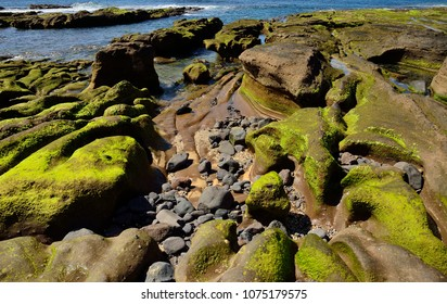 Rocks with peculiar shapes at low tide, The confital, Gran canaria, Canary islands