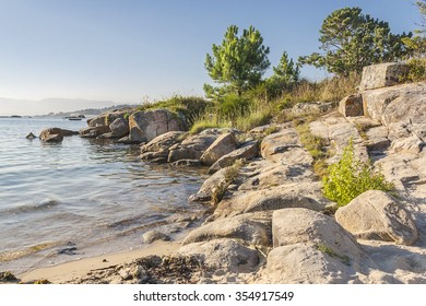 Rocks and pine trees on the seashore in Arousa Island