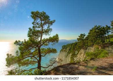 Rocks, pines and sea. Crimea.