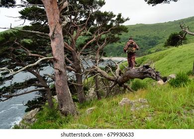 Rocks, sea, pine. Gamov Peninsula. Primorye. Russia.