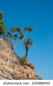 Rocks and shrubs on a hillside on the beach