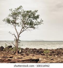 rocks under stormy sky, Andaman Shore, Thailand