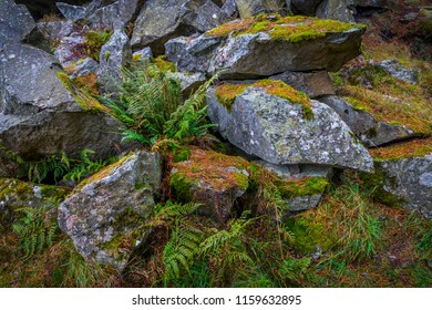 Rocks which have been quarried from a very old quarry in Blacktop Woods, Cults, Aberdeenshire.