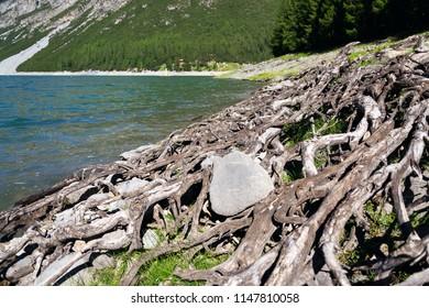 Rocks and wood on bank of Livigno Lake, Lago di Livigno, Italy, sunny summer day