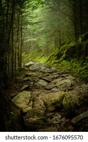 Rocky Appalachian Trail in Fog in summer