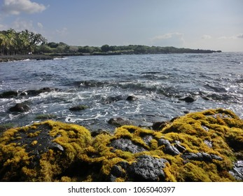 Rocky black lava stone beach with bright green algae