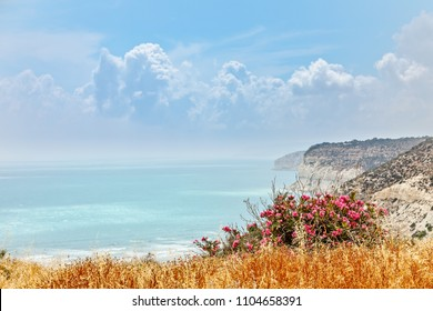 Rocky cliffs of Kurion beach with clouds and red flowers in the foreground, Limassol, Cyprus