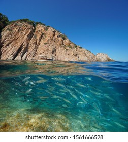 Rocky coast with a shoal of mullet fish underwater, Spain, Mediterranean sea, Costa Brava, split view over and under water surface, Aigua Xelida, Palafrugell, Catalonia