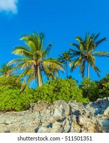 Rocky coast of a tropical island with white sandy beach and palm trees, Maldives