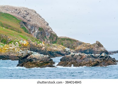 rocky coastal scenery including a huge bird sanctuary at the Seven Islands in Brittany, France