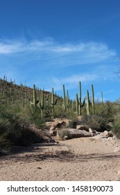 A rocky, dirt pull out on Hohokam Road at the Sus Picnic Area, surrounded by Saguaro, Ocotillo and scrub brush in Saguaro National Park, Arizona