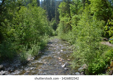 Rocky Flowing Stream Through Trees