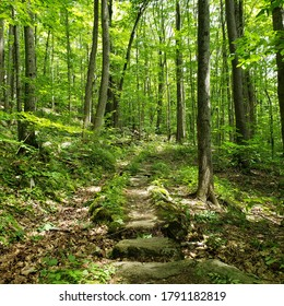 Rocky foot path in the woods, Massachusetts