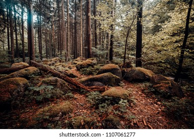 Rocky forest floor in the coniferous forest