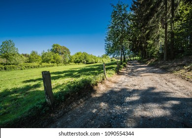 Rocky forest road and green meadow in a sunny landscape