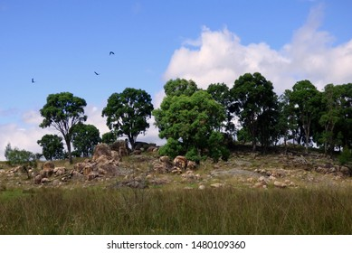 Rocky hill and gum trees