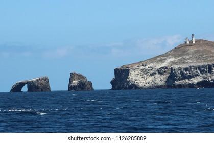 Rocky Island: Wildlife, Ocean, Rocky seaside cliffs