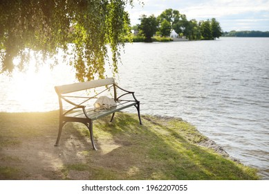 Rocky lakeshore and forest on a sunny summer day. Green deciduous trees, plants. Wooden bench under a tree. Strängnäs, Mälaren lake, Sweden. Idyllic landscape. Nature, ecology, environment, recreation