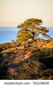 The rocky landscape of Torrey Pines State Reserve in San Diego, California