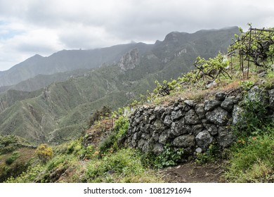 Rocky Landscape view and vineyard near Taganana vilage, Tenerife, Canary Islands