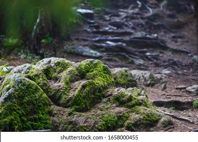 Rocky mountain path through the forest, fog and moss on the rocks in the damp forest. Eco-tourism in wild forests in mountainous areas of Bulgaria
