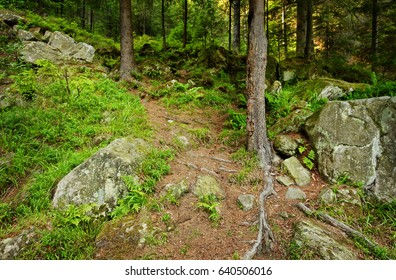 rocky mountain slope with trees