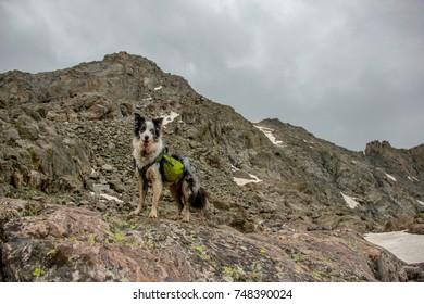 Rocky Mountain Vista - Landscape